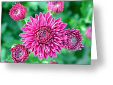 Spring It On Greeting Card