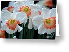 Spring Jonquils Greeting Card