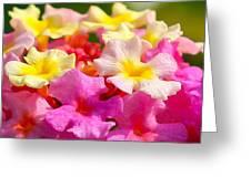 Spring Lantana Greeting Card by James Hammen