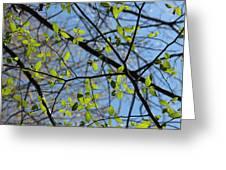 Spring Leaves 2 Greeting Card