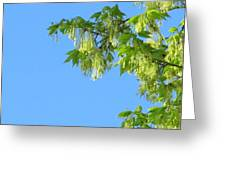 Spring Leaves And Sky Two Greeting Card