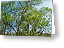 Spring Leaves In The Willows Greeting Card