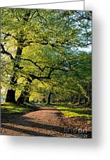 Spring Light  Greeting Card by Tim Gainey
