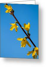 Spring Lights Greeting Card