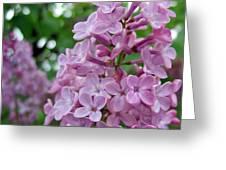 Spring Lilac Greeting Card