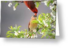 Cardinal Spring Love Greeting Card