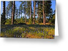 Spring Lupines In The Forest Greeting Card