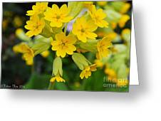 Spring Lyric Greeting Card