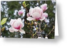 Spring Magnolia Tree Flowers Pink White Greeting Card