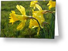 Spring Meadow Field Daffodil Flowers Greeting Card