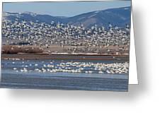 Spring Migration Greeting Card