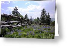 Spring Mountain Lupines 2 Greeting Card