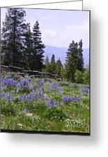 Spring Mountain Lupines Greeting Card