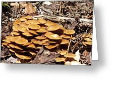 Spring Mushrooms 2 Greeting Card