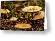 Spring Mushrooms Greeting Card