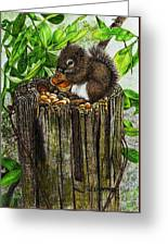 Spring Nuts Greeting Card