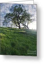 Spring Oaks Greeting Card