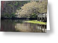 Spring On The Ashely River Greeting Card