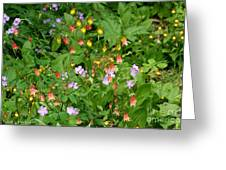 Spring On The Forest Floor Greeting Card