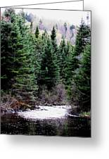 Spring On The Stream Greeting Card by Will Boutin Photos