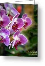 Spring Orchids I Greeting Card