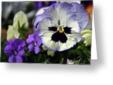 Spring Pansy Flower Greeting Card