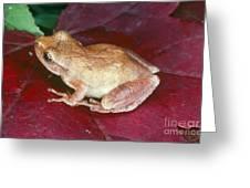 Spring Peeper Greeting Card