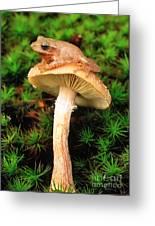 Spring Peeper On Mushroom Greeting Card