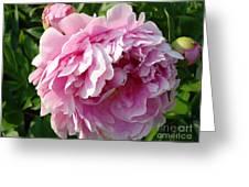 Spring Peony Greeting Card