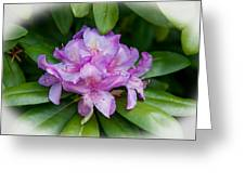 Spring Perfect Rhodie Greeting Card