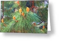 Spring Pine Greeting Card