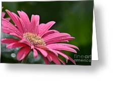 Spring Pink 2014 Greeting Card