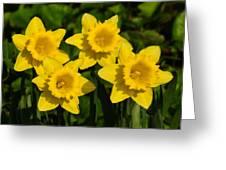 Spring Quartet Greeting Card