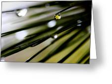 Spring Rain On The Pines Greeting Card