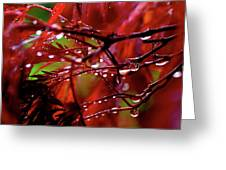 Spring Rain Greeting Card by Rona Black