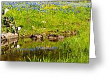 Spring Reflection Greeting Card by Thomas Pettengill