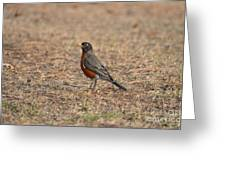 Spring Robin 2014 Greeting Card