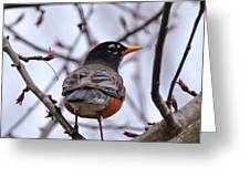 Spring Robin Greeting Card
