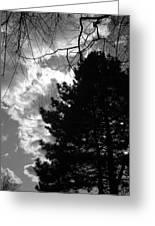 Spring Sky And Pine 1 Bw Greeting Card