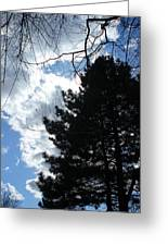Spring Sky And Pine 1 Greeting Card
