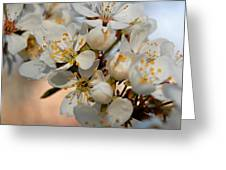 Spring Smells Of Cherries Greeting Card