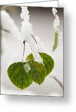 Spring Snow On Aspen Greeting Card
