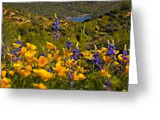 Spring Southwest Style  Greeting Card