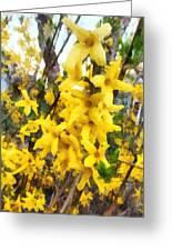 Spring - Sprig Of Forsythia Greeting Card