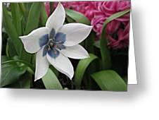 Spring Star Greeting Card