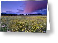 Spring Storm At Andalucia Greeting Card