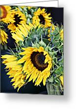 Spring Sunflowers Greeting Card