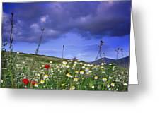 Spring Sunset Windy Days Greeting Card
