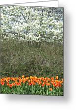 Spring Time Blooms Greeting Card