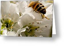 Spring Time Cherry Blossoms Greeting Card by Artist and Photographer Laura Wrede